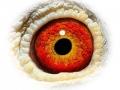 Hebberecht-Eye