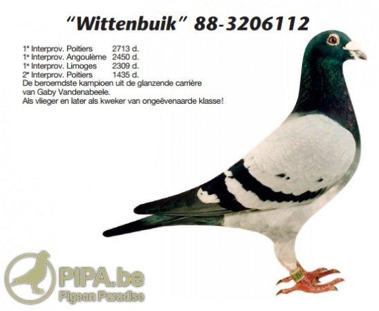 vandenabeele_foto_wittenbuik