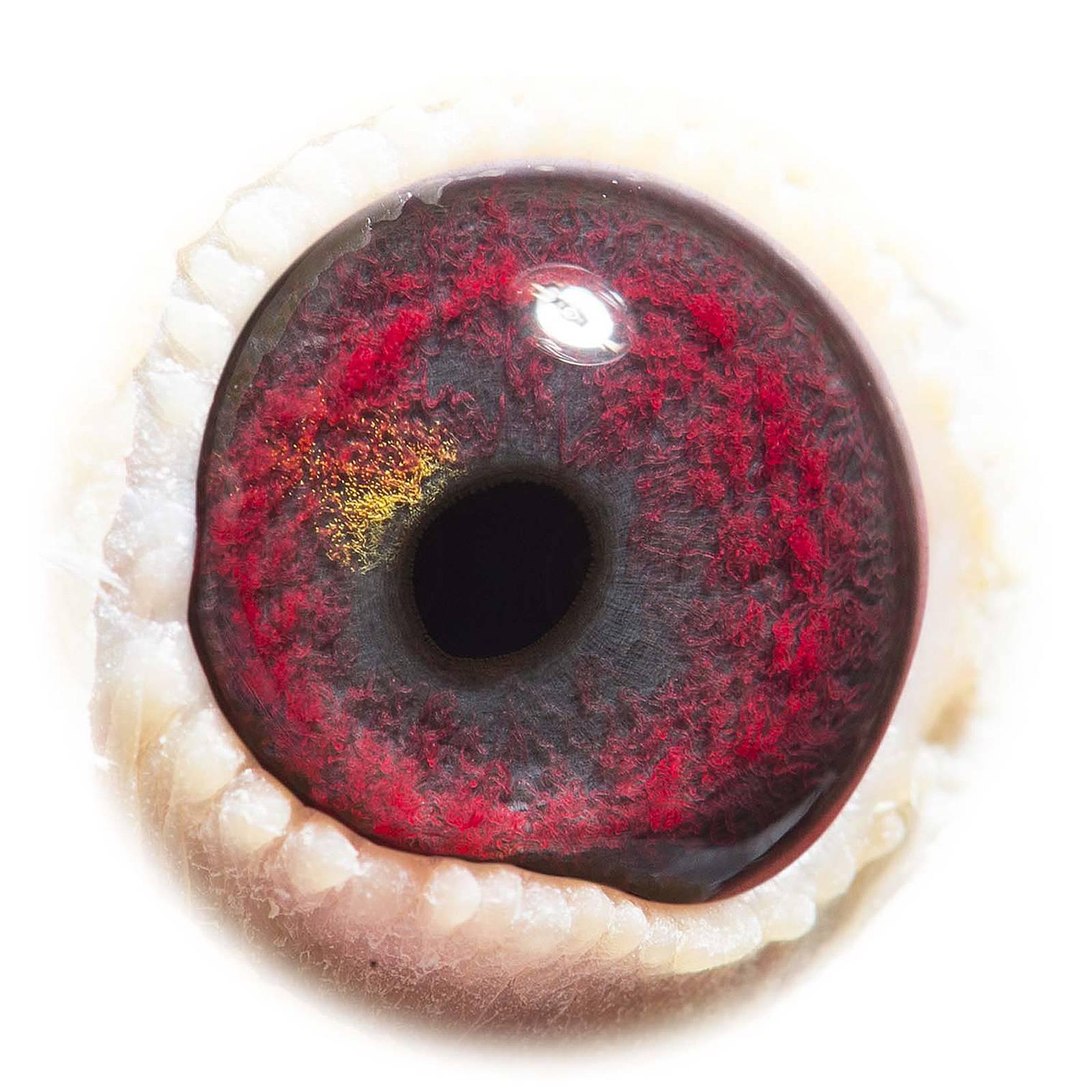 GB15-P30592_eye_1