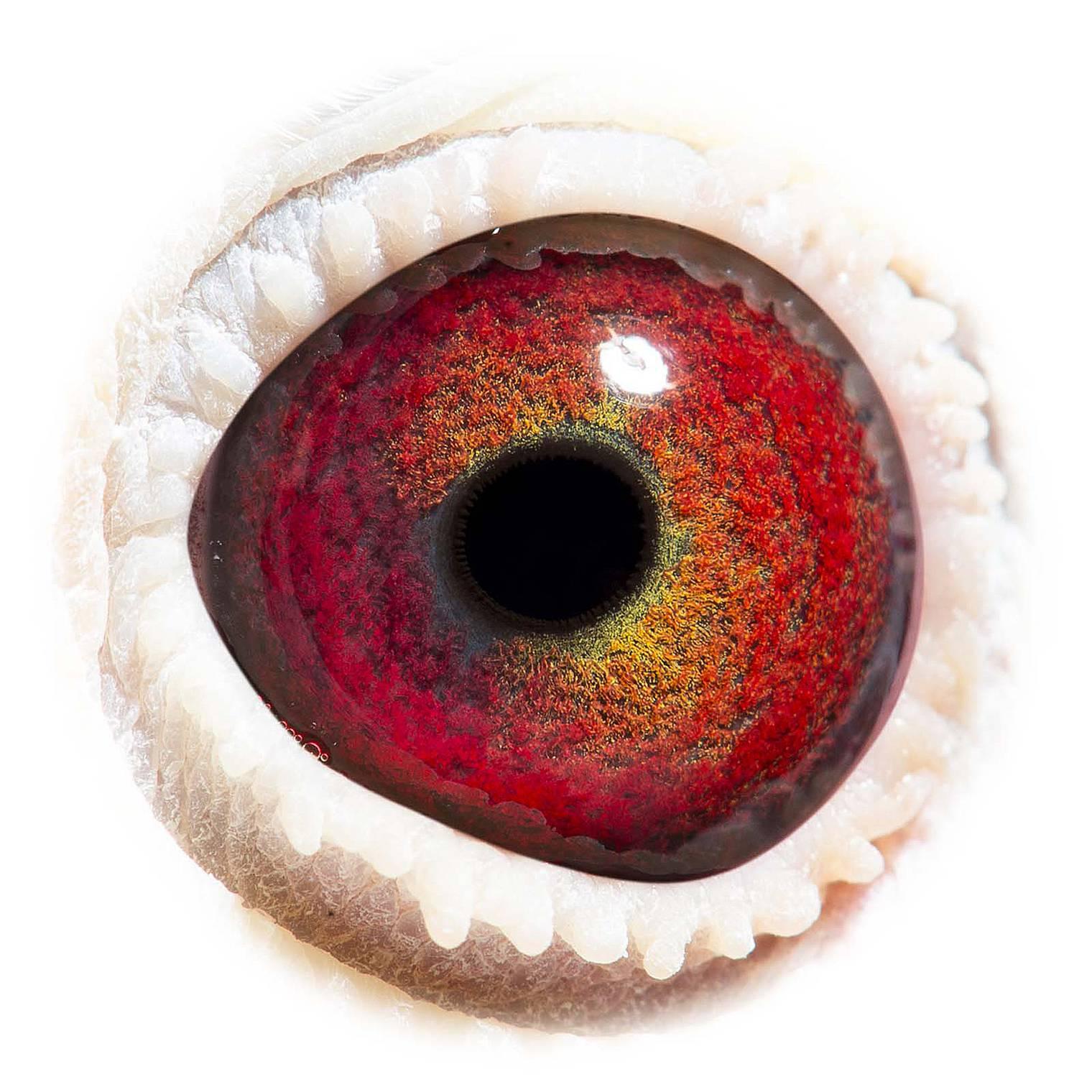 GB15-P31696_eye_1