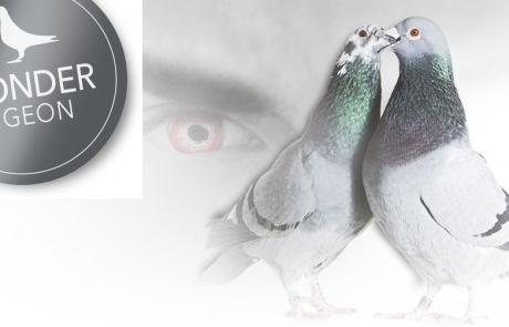 wonder-pigeon1