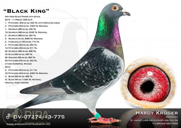 krueger_black_king_dv-07274-13-775