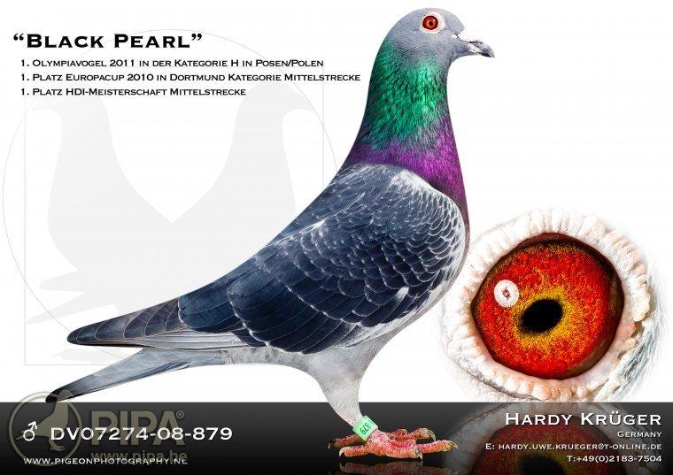 krueger_black_pearl_dv07274-08-879