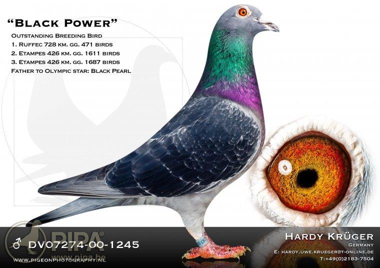 krueger_black_power_dv07274-00-1245_2