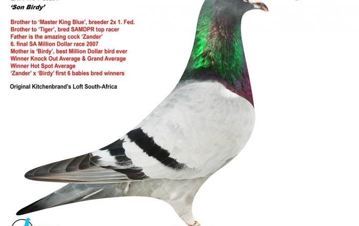 son birdy za14-trpf-25254