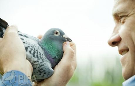 hooymans-pigeons-056