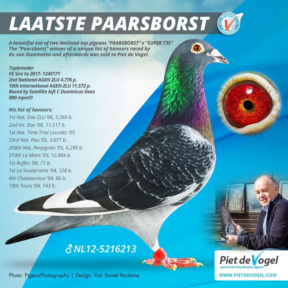 NL12-5216213