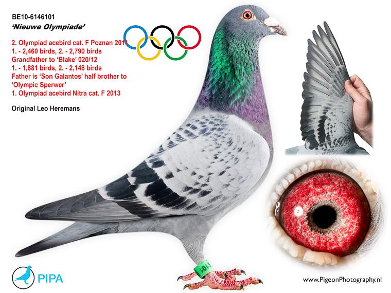 """* Team Florea Sorin detine un frate bun cu """"New Olympiade"""" ;"""